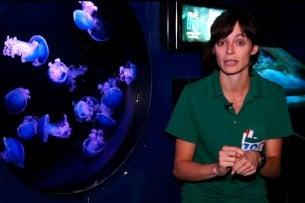 Aprende a identificar las medusas peligrosas