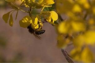 ¿Seré alérgico a algún tipo de insecto?