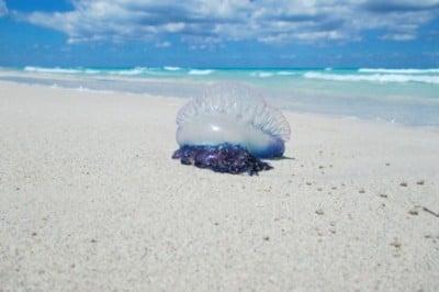 5 de los 'peligros' más habituales bajo el mar
