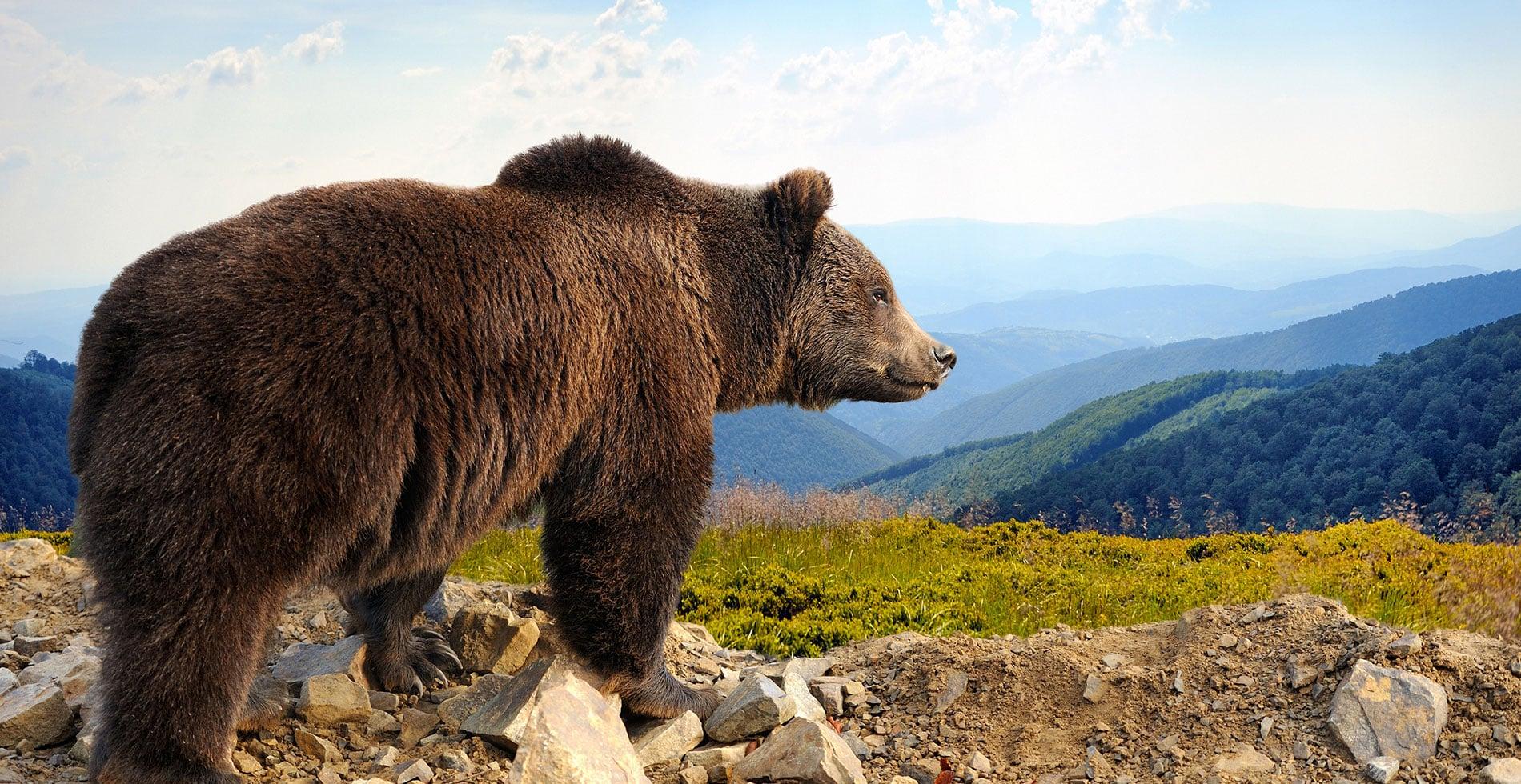 Las 10 especies más amenazadas de España