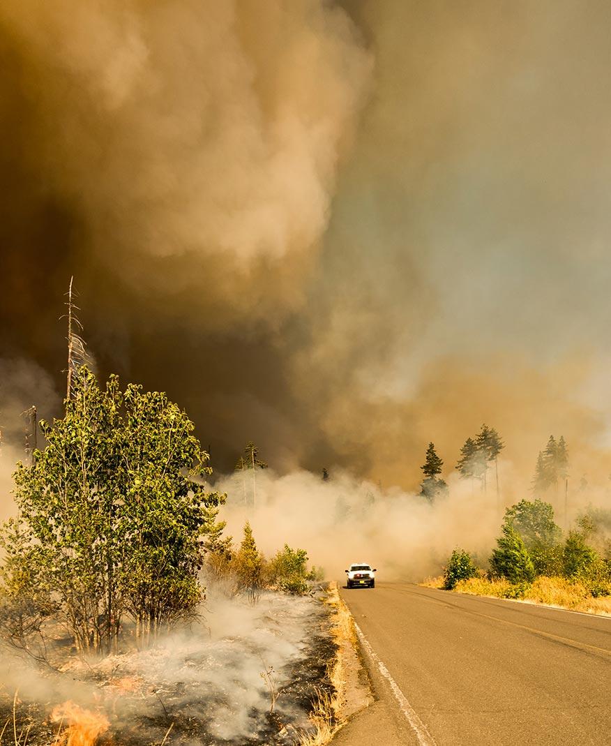 Tecnolog a contra los efectos de los desastres naturales - Aromatizantes naturales para la casa ...