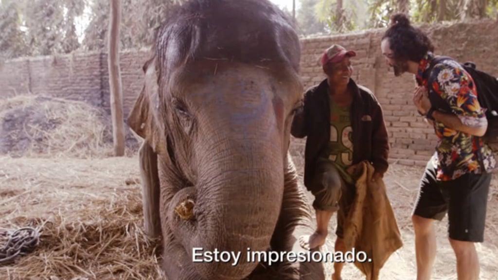 Un descanso entre elefantes