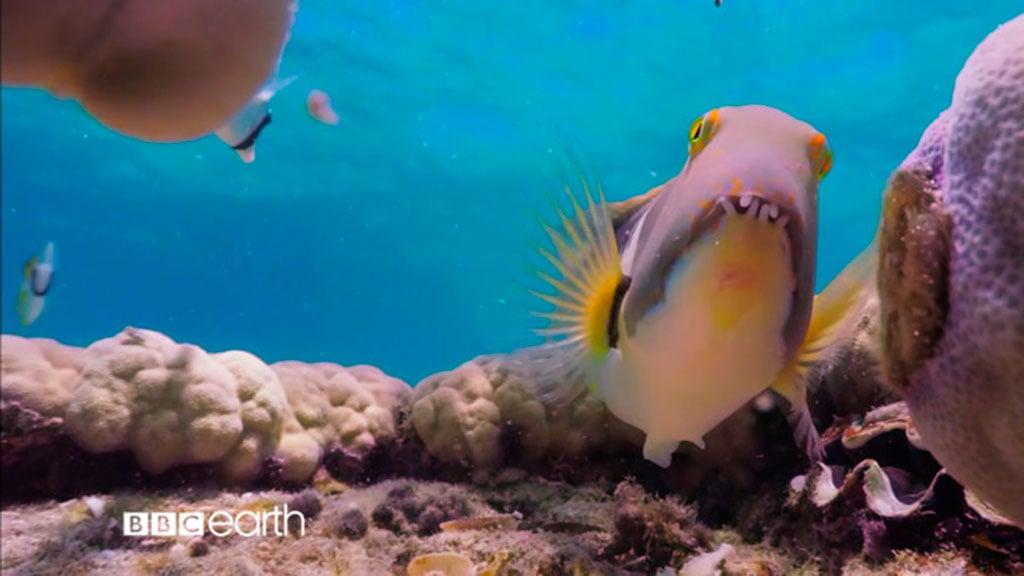 Un pez más listo que el hambre