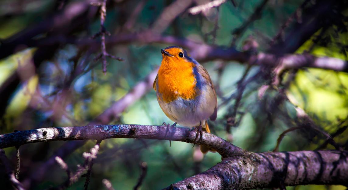 Apagar el ruido para oír la música de la naturaleza