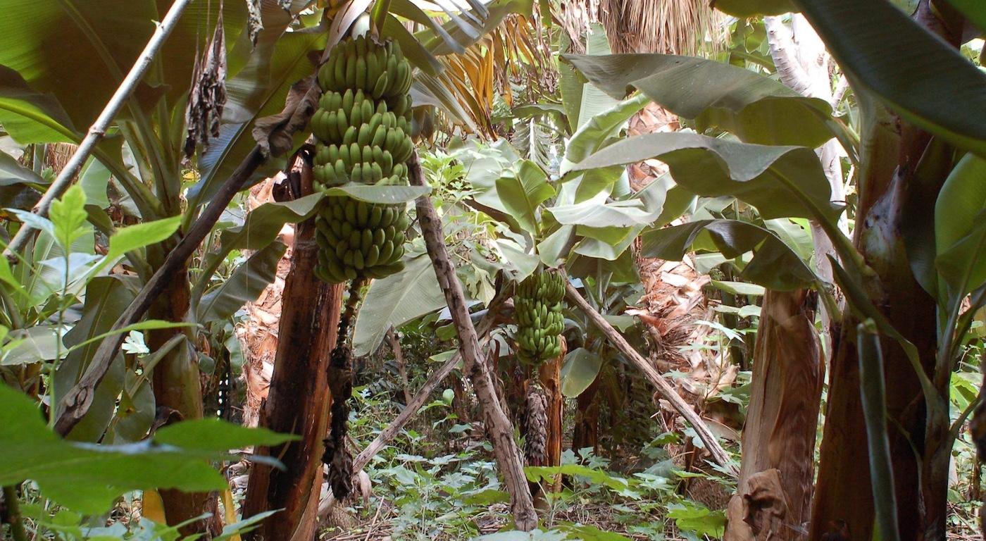 Cinco rincones de España para hacer ecoturismo