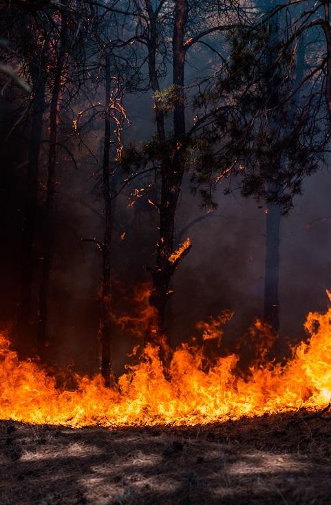 ¿Cómo se recupera el suelo tras un incendio?
