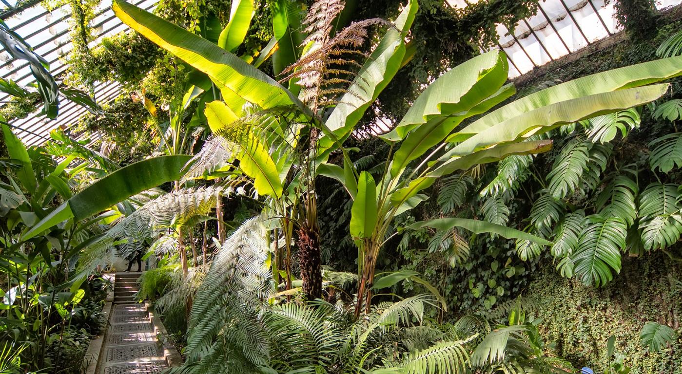 Cinco jardines botánicos para desconectar del mundanal ruido