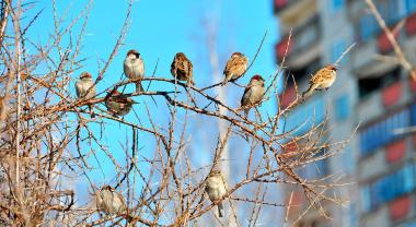 El desarrollo urbano, una amenaza para la biodiversidad de las aves