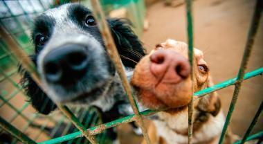 Una segunda oportunidad para los animales maltratados