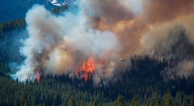 ¿Cómo se sofoca un incendio forestal?