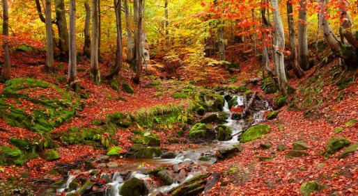 Ocho parajes naturales en los que dar la bienvenida al otoño