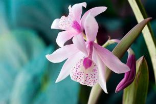 6 plantas que los alérgicos pueden tener cerca